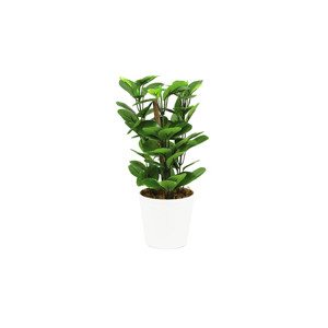 Kleinpflanzen