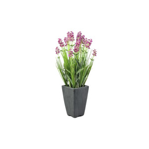 Blütenbüsche
