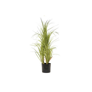 Palmbüsche
