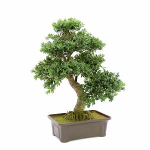 Formale Bäume