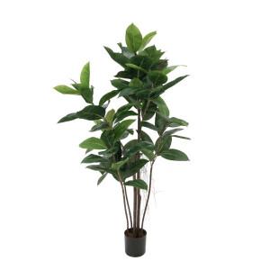 Solitärpflanzen